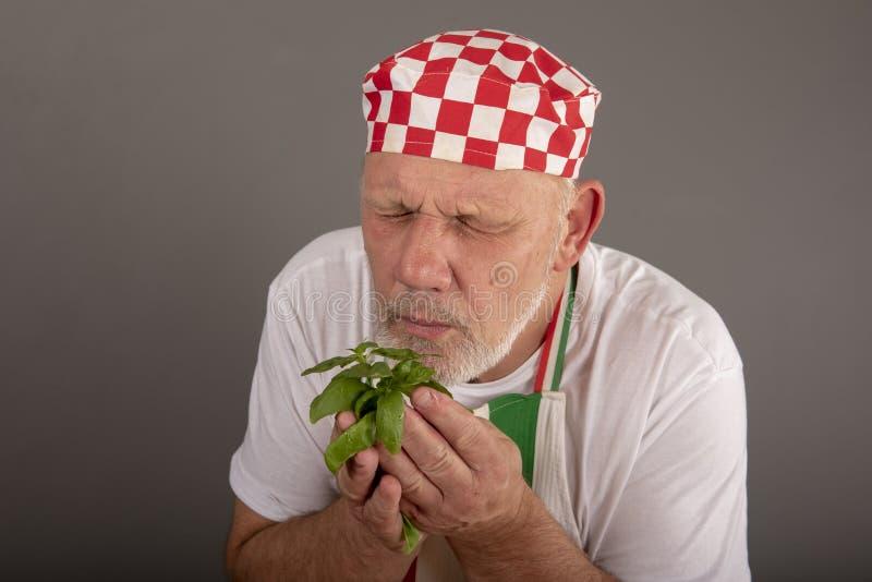 Folhas de cheiro da manjericão do cozinheiro chefe italiano maduro foto de stock