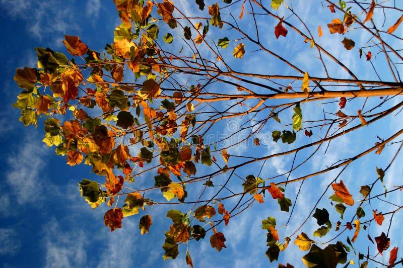 Folhas De Colorul Fotografia de Stock