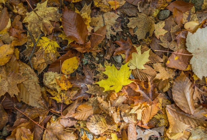 Folhas de Forest Floor Collage Of Autumn foto de stock