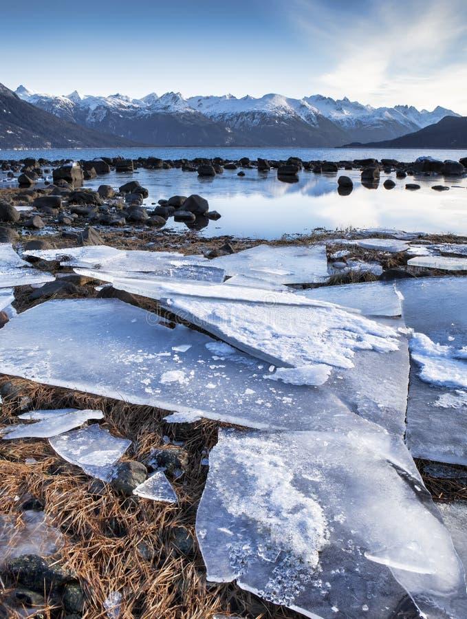 Folhas de gelo do ponto de imagem fotografia de stock royalty free