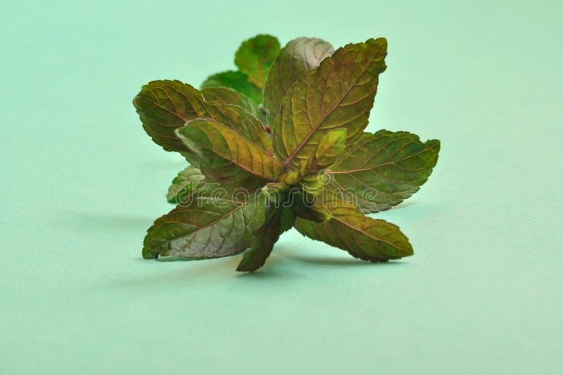 Folhas de hortelã da pimenta foto de stock