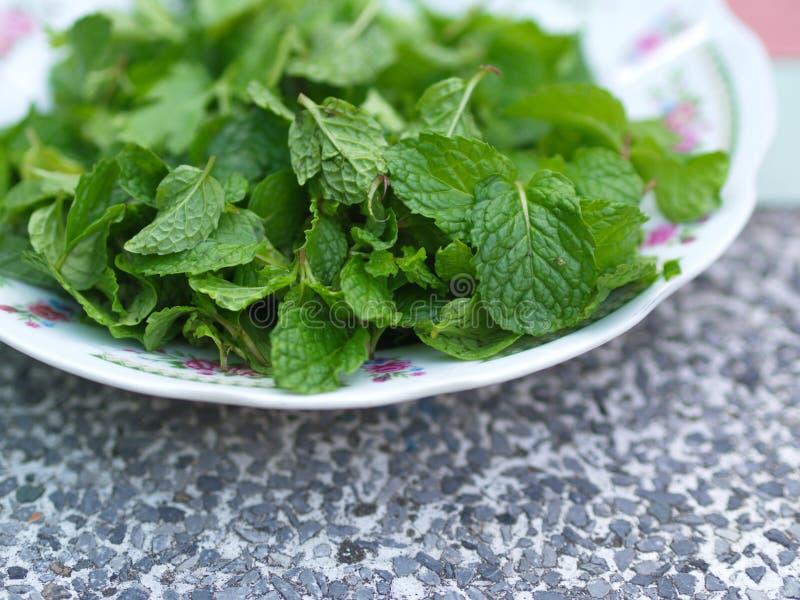 Folhas de hortelã, a receita principal para o alimento tailandês-Esan da exploração agrícola do campo com luz natural na manhã Ta imagens de stock