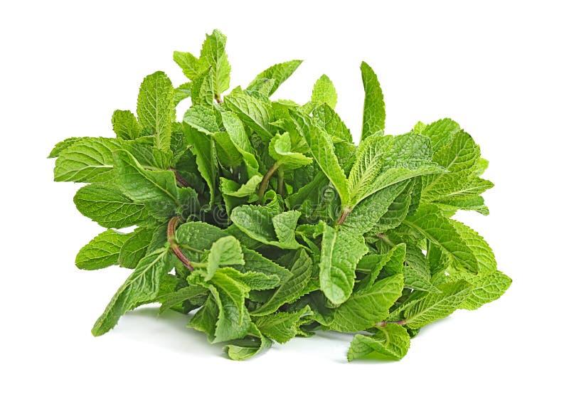 Folhas de hortelã verdes frescas imagem de stock royalty free