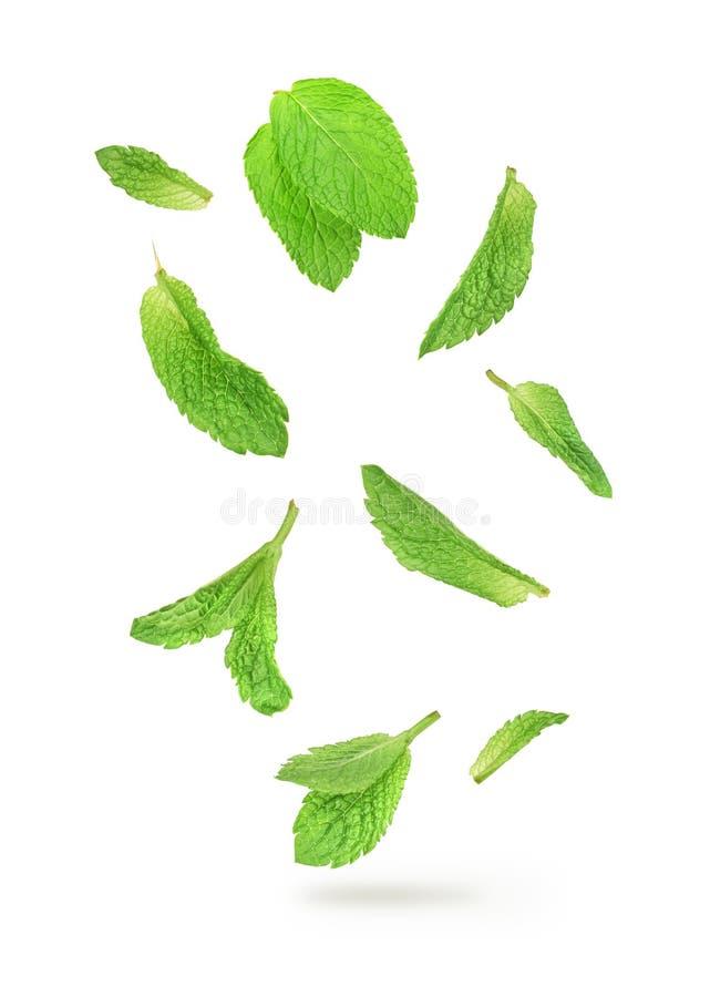 Folhas de hortelã verdes que caem no ar imagens de stock