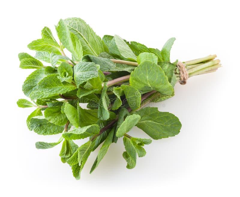 Folhas de hortel? fresca isoladas no branco imagens de stock