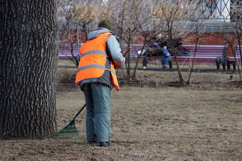 Folhas de limpeza na cidade, mulher do guarda de servi?o que varre a folha no parque da mola fotografia de stock