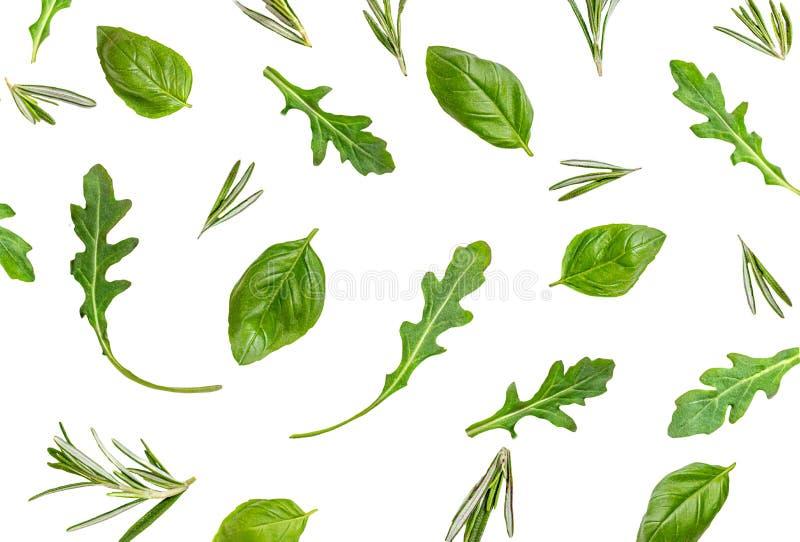 Folhas de manjericão orgânico e erva de ruccola isoladas em fundo branco Herbs Pattern Largura plana, vista superior Conceito de  imagem de stock royalty free