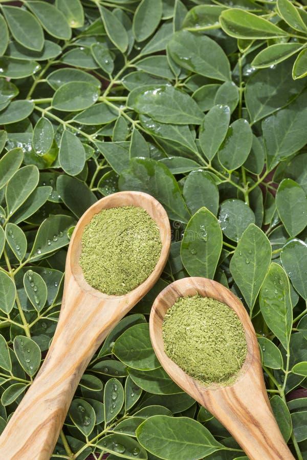 Folhas de Moringa e pó - moringa oleifera foto de stock