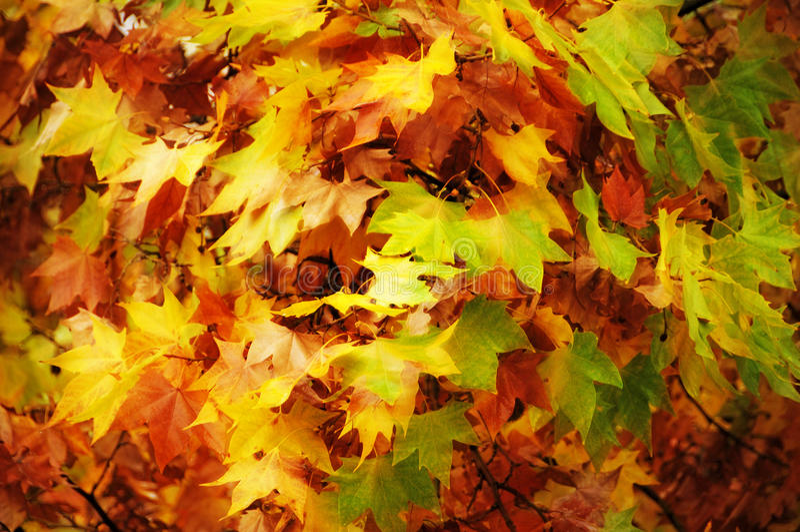 Folhas de outono imagem de stock royalty free