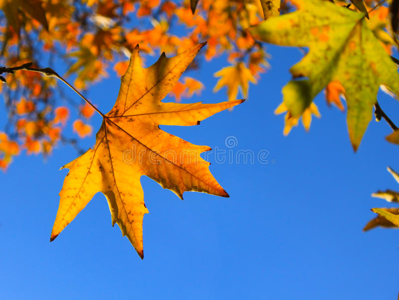 Download Folhas de outono imagem de stock. Imagem de frescor, azul - 26519043