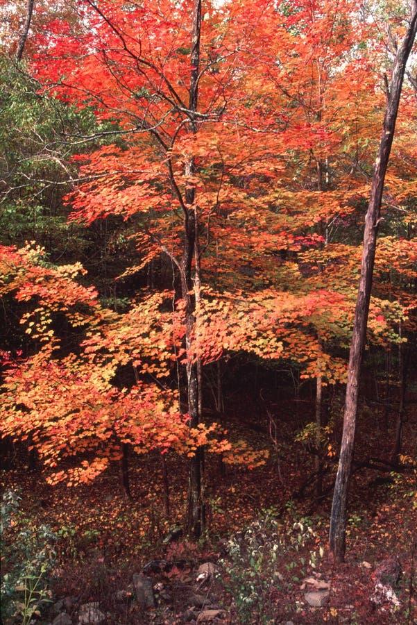 Download Folhas de outono foto de stock. Imagem de árvore, estações - 26521292