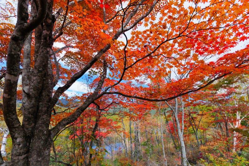 Download Folhas de outono imagem de stock. Imagem de ninguém, japonês - 26523801