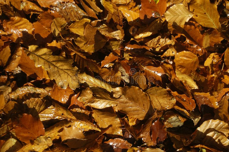Download Folhas de outono foto de stock. Imagem de terra, glistening - 353792