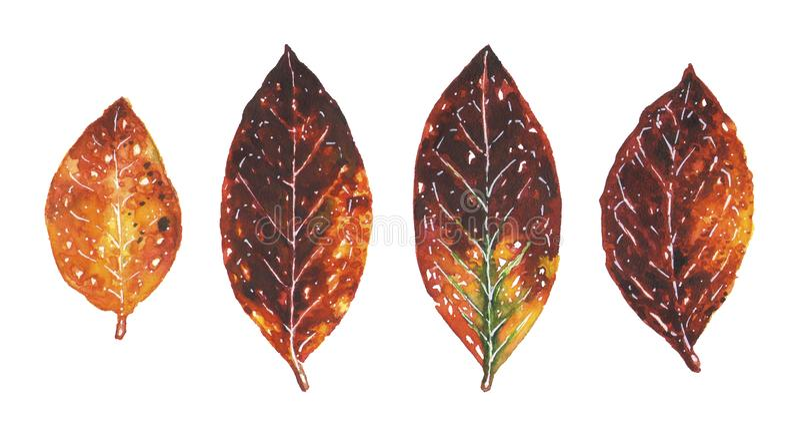 Folhas de outono alaranjadas Ilustrações da aquarela ajustadas ilustração stock