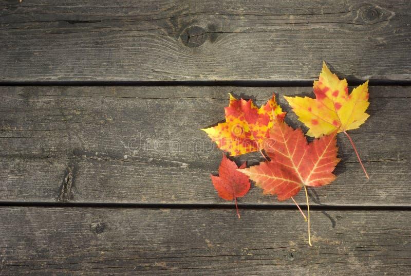 Folhas de outono amarelas e vermelhas no fundo de madeira da tabela fotos de stock