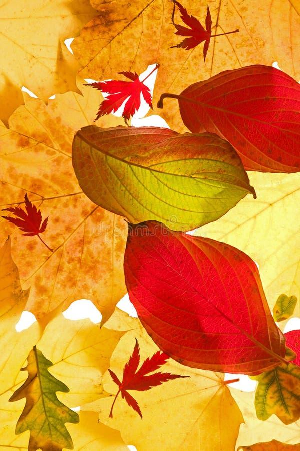 Folhas de outono Assorted foto de stock