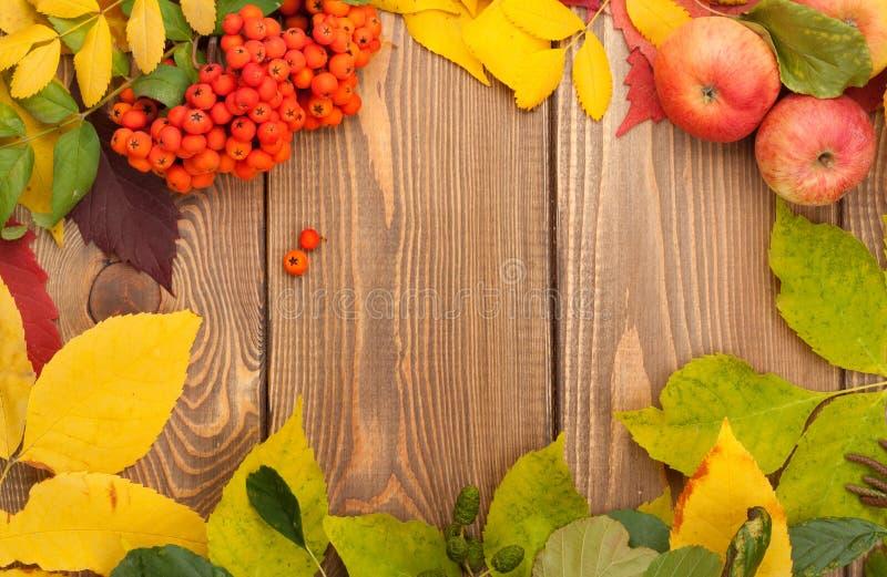 Folhas de outono, bagas de Rowan e maçãs sobre o fundo de madeira fotos de stock