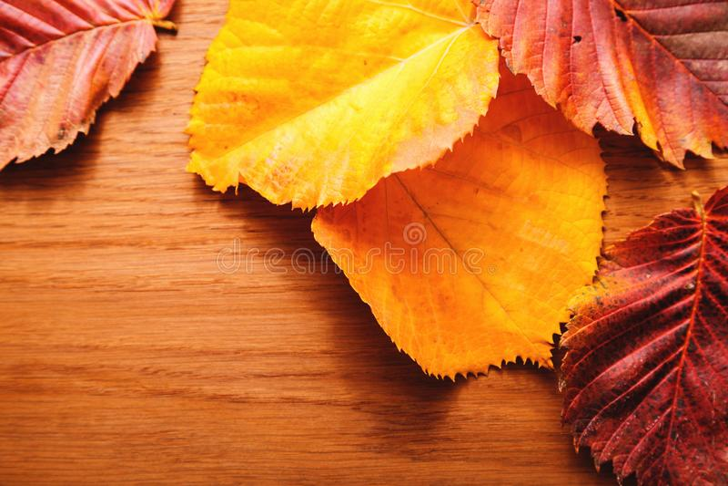 Folhas de outono brilhantes Vermelho, amarelo, folhas do verde Fundo de madeira Frame da folha Fim acima imagens de stock