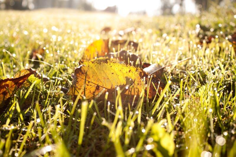 Folhas de outono caídas foto de stock royalty free