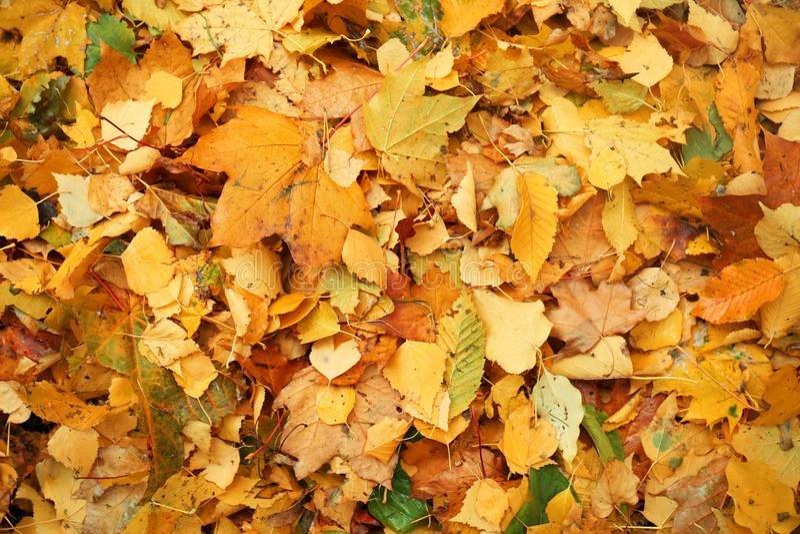 Folhas de outono coloridas fotografia de stock