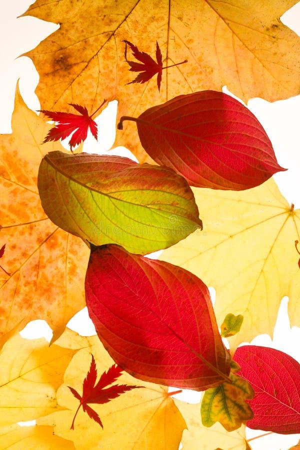Folhas de outono coloridas