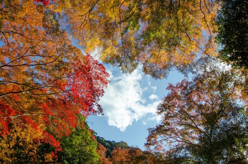 Folhas de outono coloridas foto de stock royalty free