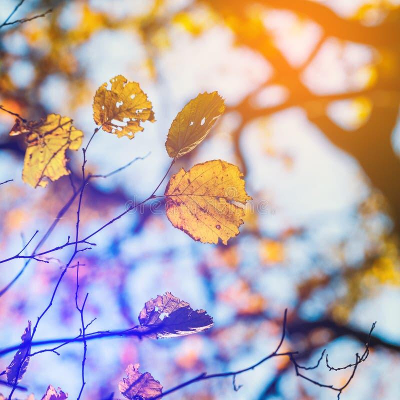 Folhas de outono coloridas com céu azul imagem de stock royalty free