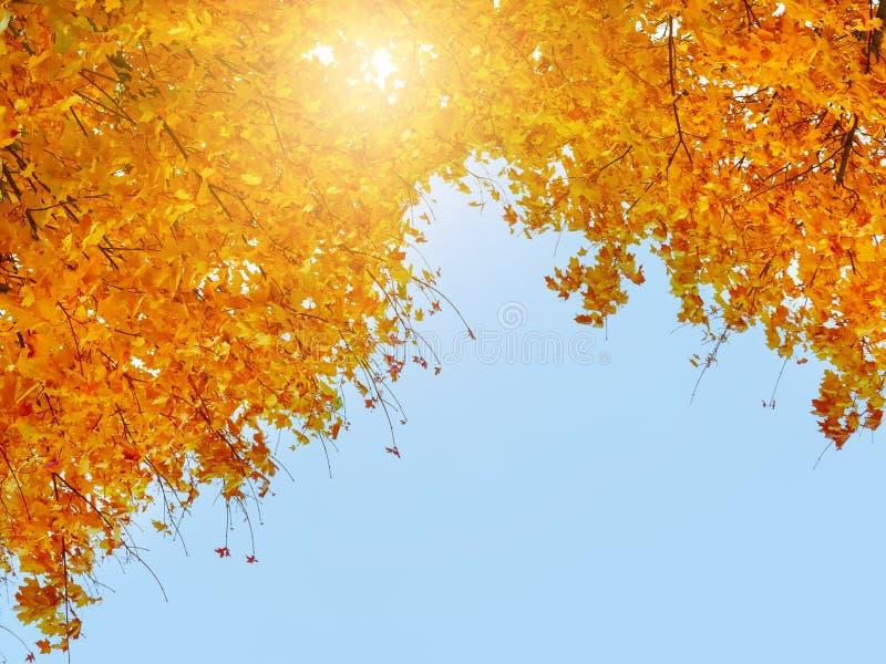 Folhas de outono coloridas contra o céu azul, o sol e as nuvens Copyspace, fundo imagem de stock