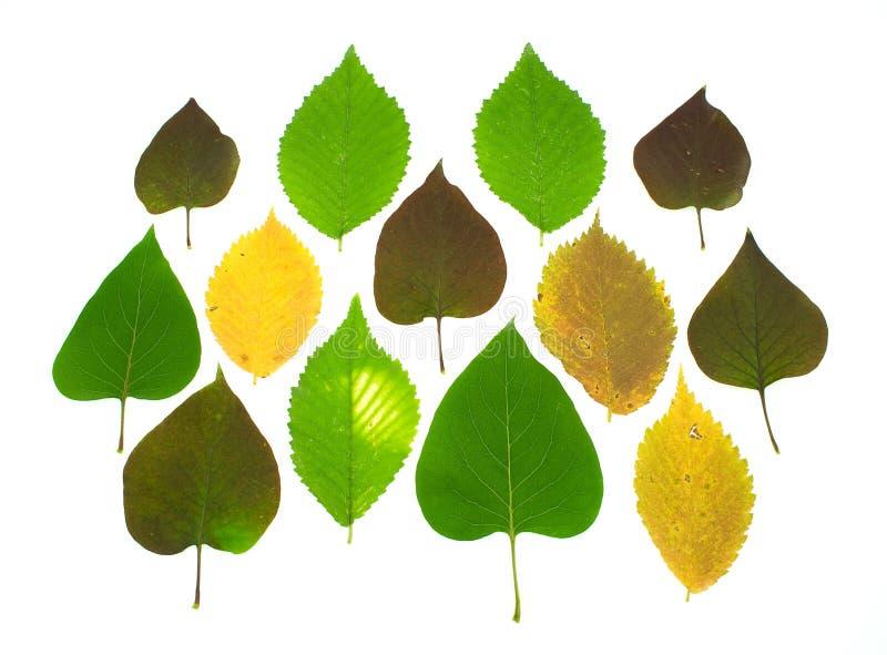 Folhas de outono coloridas do jogo fotografia de stock