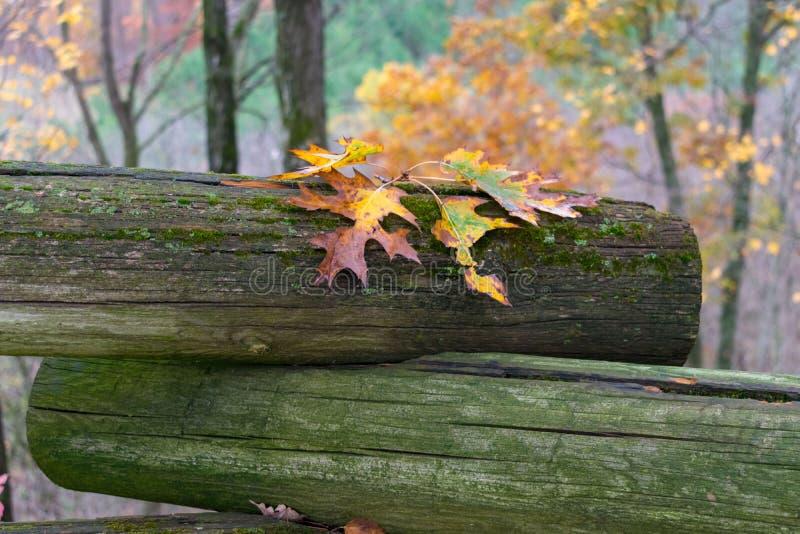 Folhas de outono coloridas em uma cerca do log em um dia chuvoso imagens de stock royalty free