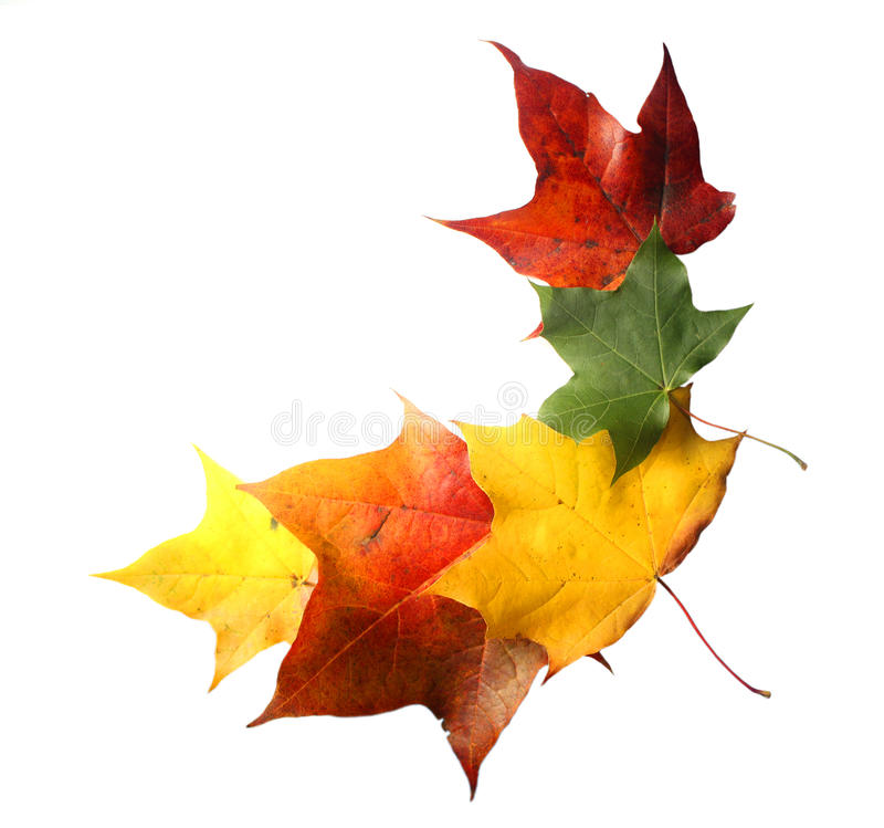 Folhas de outono coloridas isoladas imagem de stock