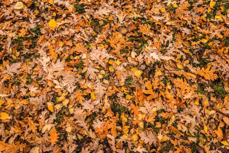 Folhas de outono coloridas na grama imagem de stock
