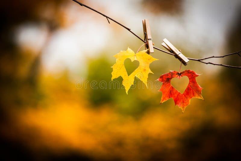 Folhas de outono com corações imagens de stock royalty free