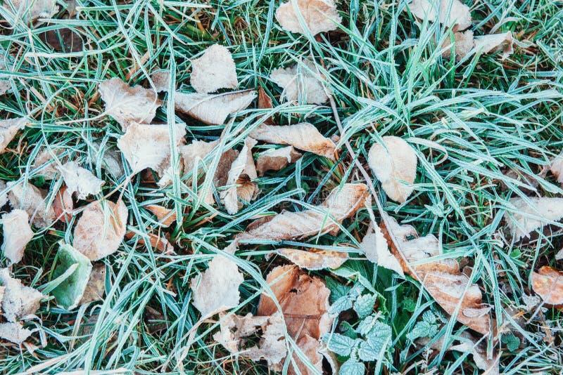 Folhas de outono congeladas na grama verde fotografia de stock