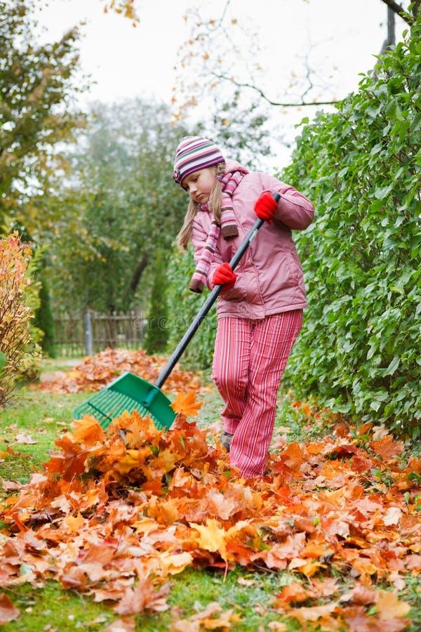 Folhas de outono do ancinho da menina no jardim imagens de stock royalty free