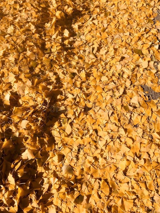 Folhas de outono douradas no terreno bonito do Carnegie Mellon - PITTSBURGH - PENSILVÂNIA imagem de stock