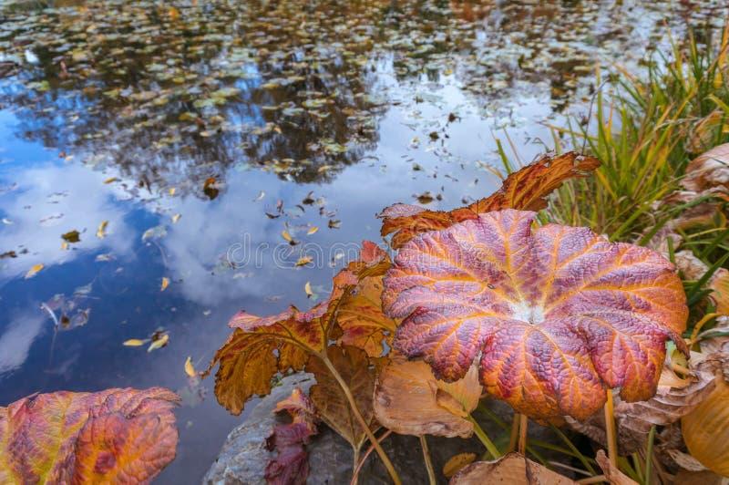 Folhas de outono e fundo da água fotografia de stock royalty free