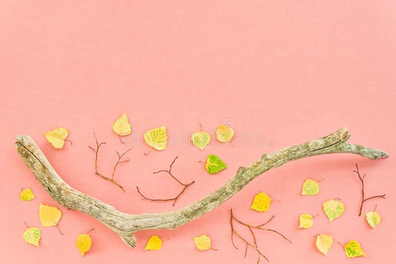 Folhas de outono e ramo de árvore musgoso no fundo cor-de-rosa imagem de stock royalty free