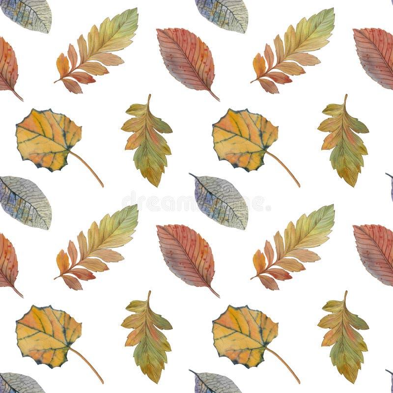 Folhas de outono elegantes para o projeto diferente da cor Teste padr?o sem emenda da aquarela das folhas coloridas ilustração royalty free