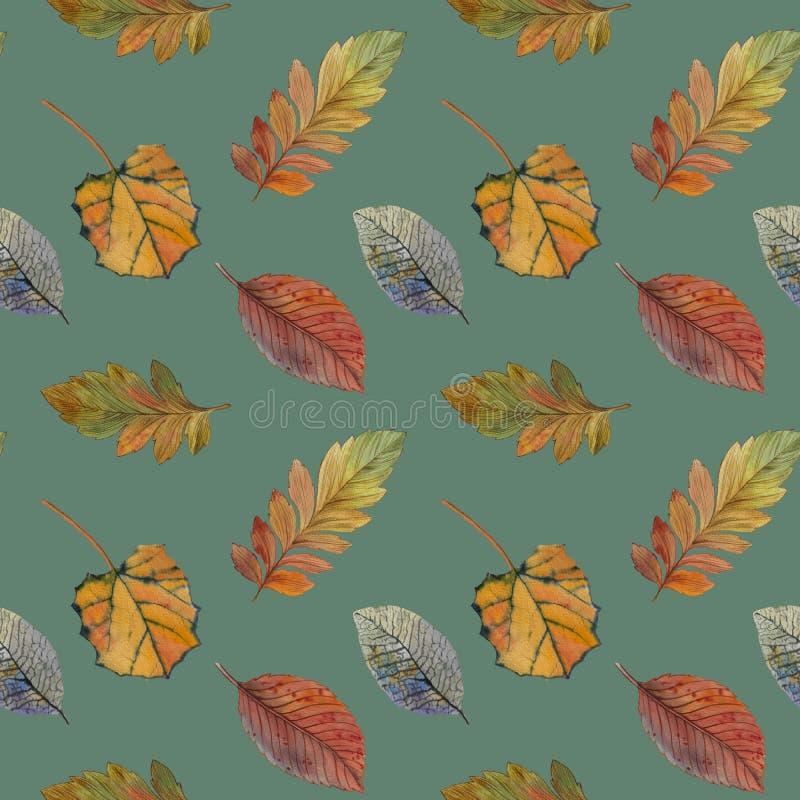 Folhas de outono elegantes para o projeto diferente da cor Teste padr?o sem emenda da aquarela das folhas coloridas ilustração stock