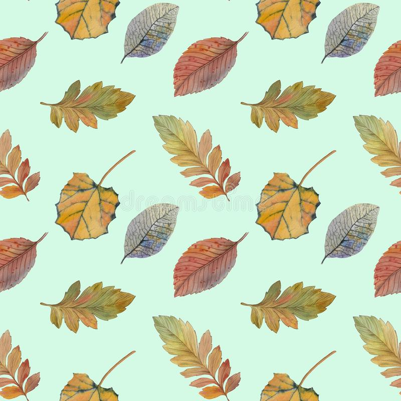 Folhas de outono elegantes para o projeto diferente da cor Teste padr?o sem emenda da aquarela das folhas coloridas ilustração do vetor