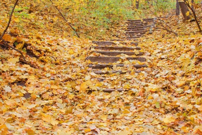 Folhas de outono em escadas dos passos concretos imagens de stock royalty free