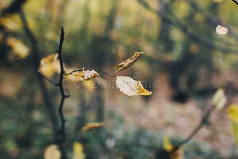 Folhas de outono em galho de árvores em bosque Lindas folhas amarelas em galhos no outono Autumn Tranquil Copiar espaço fotografia de stock royalty free
