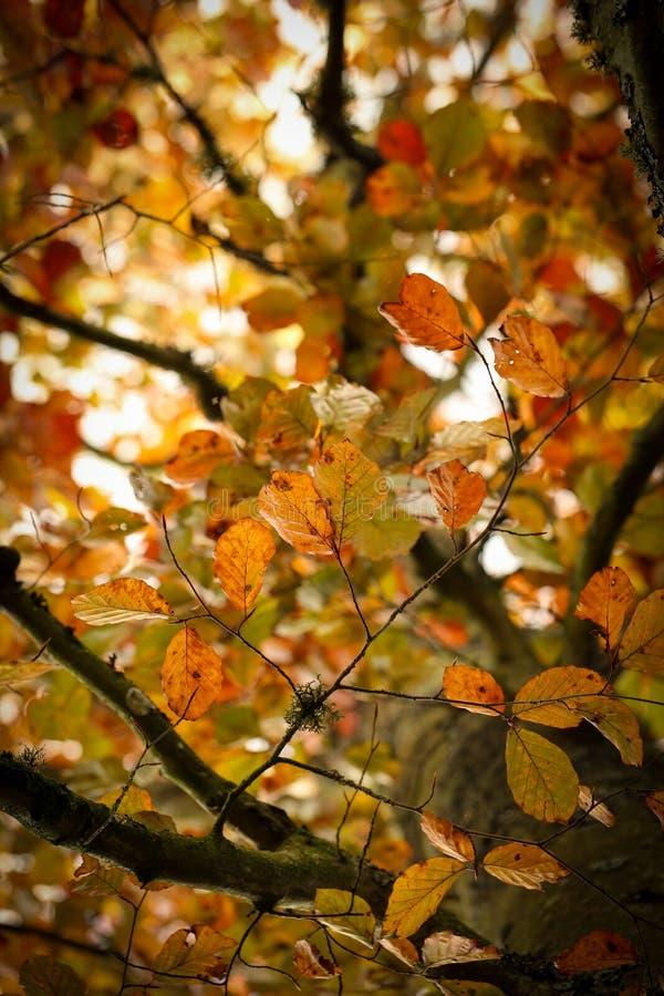 Folhas de outono em um ramo fotografia de stock royalty free