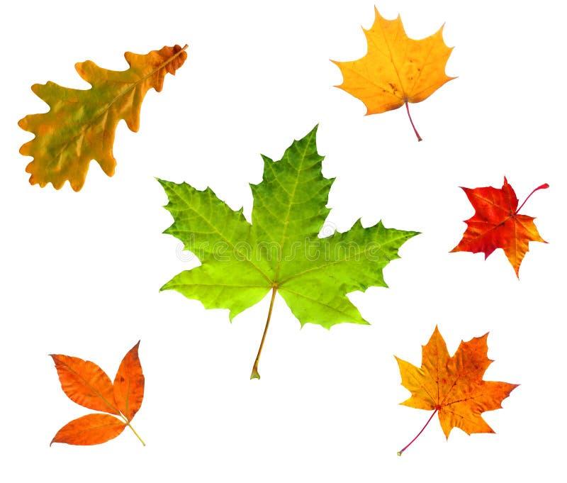 Folhas De Outono Isoladas No Branco Foto de Stock Royalty Free