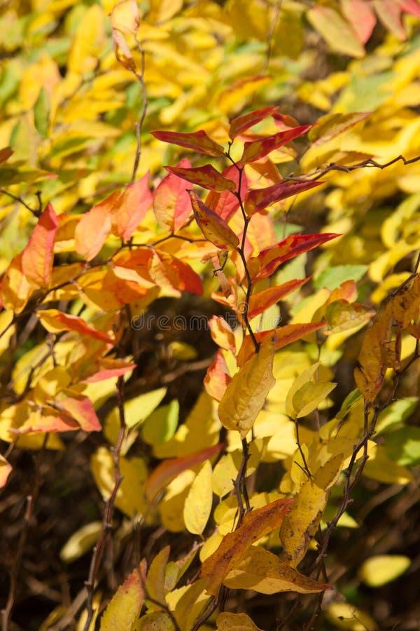 Folhas de outono na árvore do outono imagens de stock royalty free