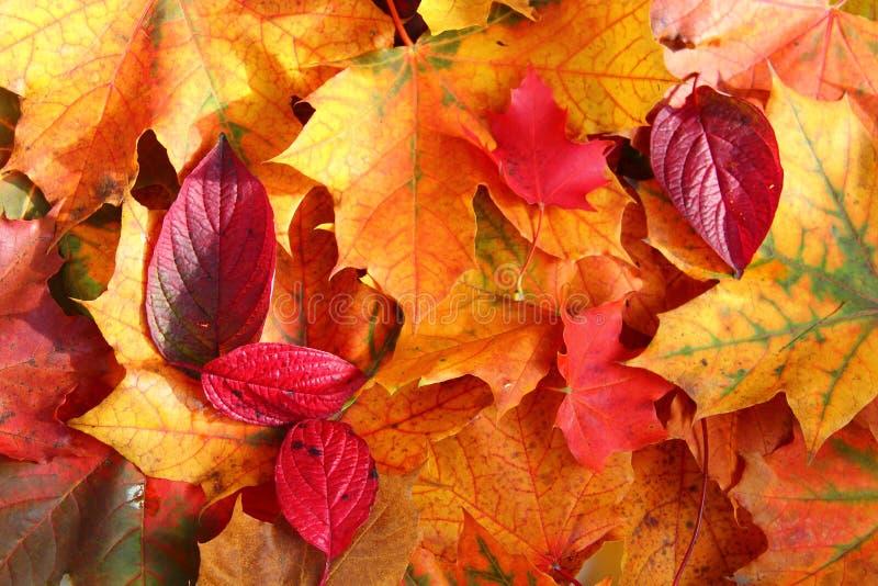 Folhas de outono na luz solar imagem de stock