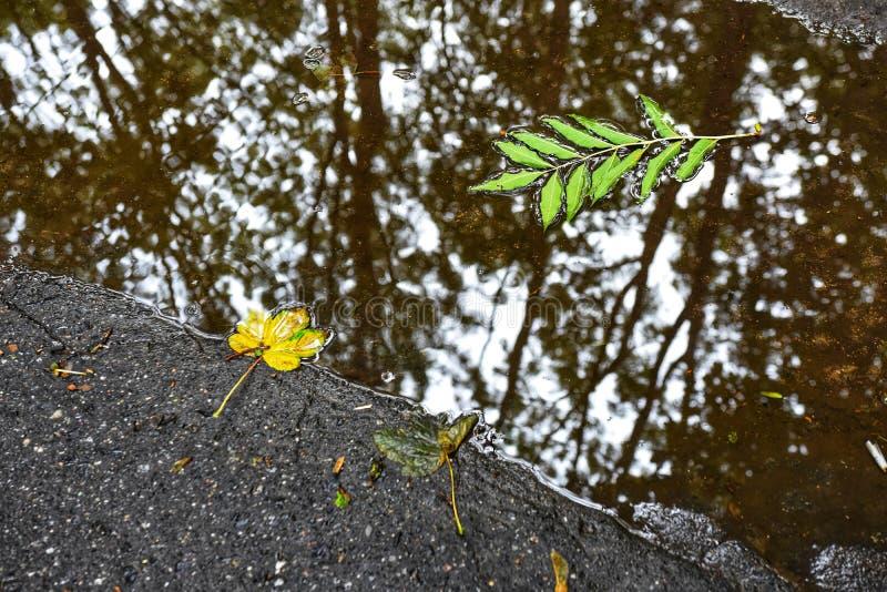 Folhas de outono na poça imagens de stock royalty free