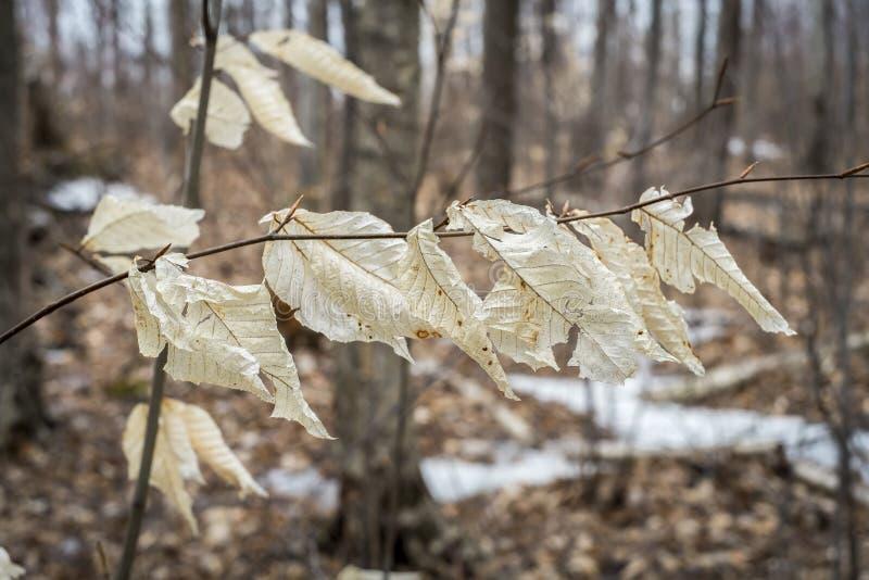 Folhas de outono na primavera foto de stock royalty free