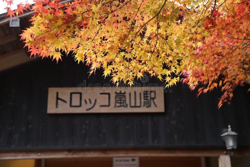 Folhas de outono na rua em Japão imagens de stock royalty free